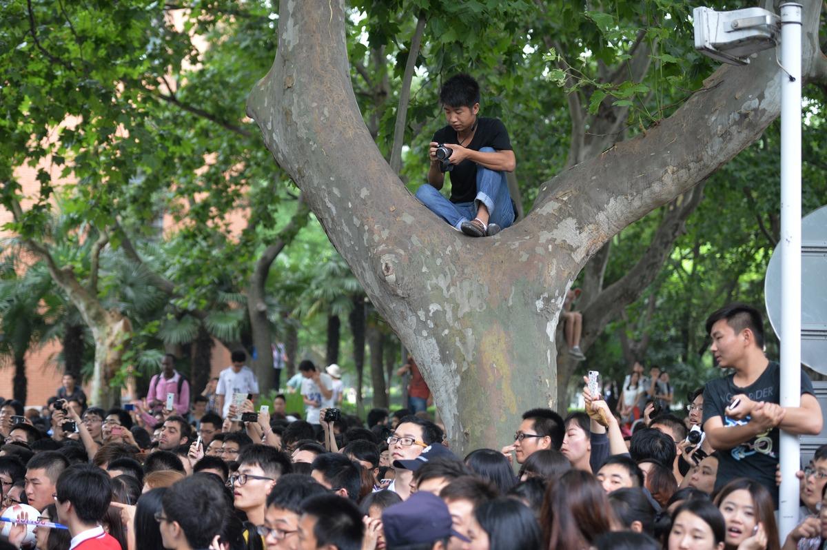Photographer up tree
